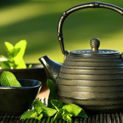 食事のお供は緑茶がおすすめ