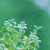 コエンザイムQ10 トナー(ヒアルロン酸配合化粧水)