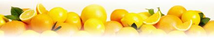 ビタミンC モイスチャーローション SPF 15(日中用保湿クリーム)