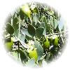 アバロンオーガニック プロアクティブA、D&Eオイントメント(おむつまわり用保湿クリーム)