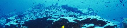 珊瑚カルシウムプラス (マグネシウム&ビタミンD配合)