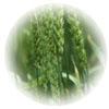 フードソース 鉄(ビタミンC配合/100%食物由来)