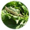グリーンプロ96 マルチ 90粒(緑野菜配合鉄抜きマルチビタミン&ミネラル)