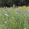 植物性オメガ3・6・9脂肪酸 1000mg