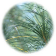 [ お得サイズ ] ピクノジェノール30mg(フランス海岸松樹皮エキス)150粒