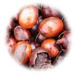 シアバター ボディクリーム(ハチミツ&ローヤルゼリー配合)