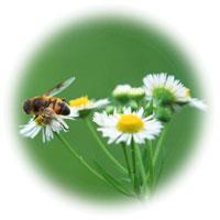 ビーポーレン(蜂花粉)